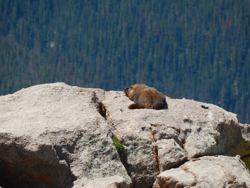 """""""Check out dem voluptuous marmot buns!"""" - My sister."""